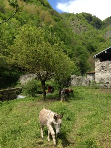 A Different Life - Lake Como Donkey (from where I started my fund raising)